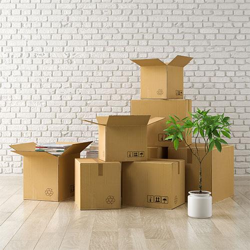 SIMA Umzüge Umzug professionelles Zubehör: Umzugskartons kaufen, Luftpolsterfolie kaufen, Verpackungsservice Umzug Pflanzen